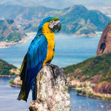 brazil-south-america